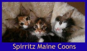 Spirritz Maine Coons