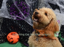 Carefree Canines, 29 Oct 15, 23 Fleurie