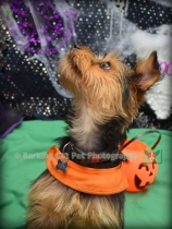 Carefree Canines, 29 Oct 15, 63 Benji