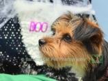 Carefree Canines, 29 Oct 15, 64 Benji