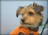 Carefree Canines, 29 Oct 15, 65 Benji