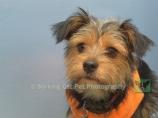 Carefree Canines, 29 Oct 15, 66 Benji