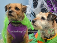 Carefree Canines, 29 Oct 15, 68