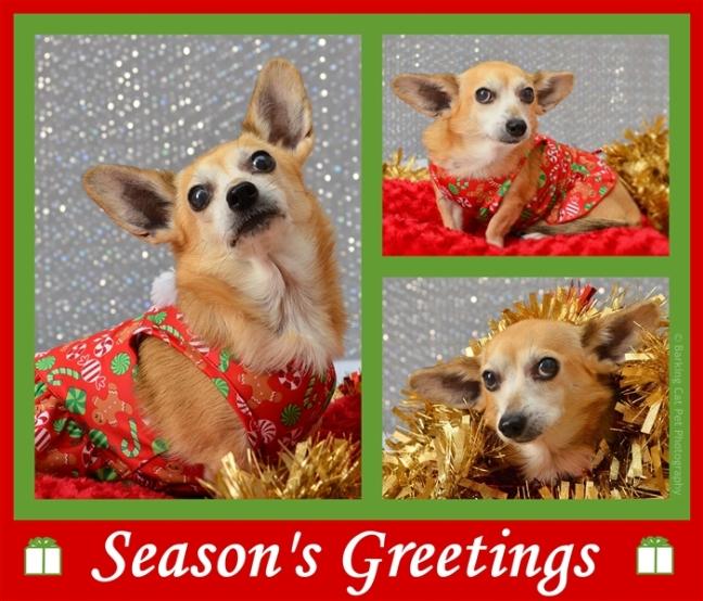 small-seasons-greetings