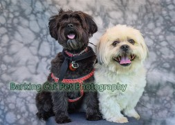 watermarked-Brodie & Cole-0709