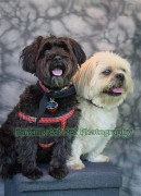 watermarked-Brodie & Cole-0710