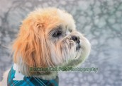 watermarked-Toby-0255