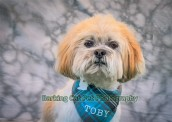 watermarked-Toby-0262