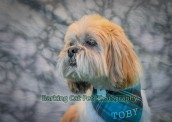 watermarked-Toby-0268