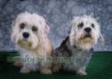 watermarked-Daisie and Darcy-0368