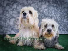 watermarked-Daisie and Darcy-0371
