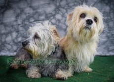 watermarked-Daisie and Darcy-0375