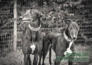 watermarked-Alfie & Mia-0258-2