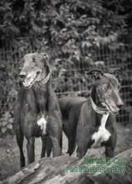 watermarked-Alfie & Mia-0268-2