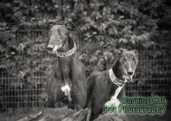 watermarked-Alfie & Mia-0288-2