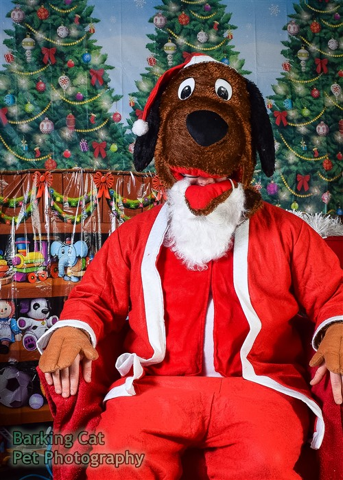 watermarked-Santa Paws-0587