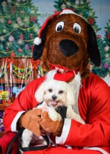 watermarked-Santa Paws-0591