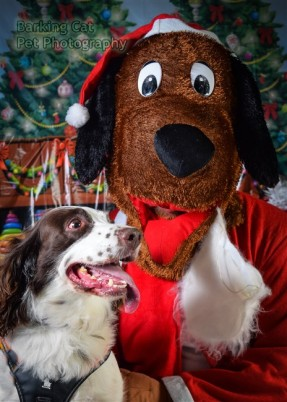 watermarked-Santa Paws-0599