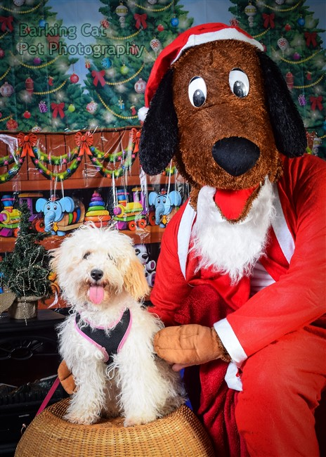 watermarked-Santa Paws-0647