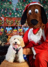 watermarked-Santa Paws-0648