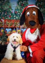 watermarked-Santa Paws-0650