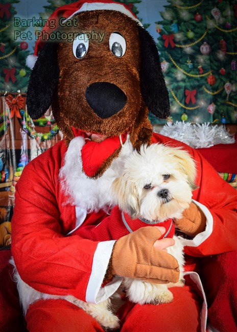 watermarked-Santa Paws-0655