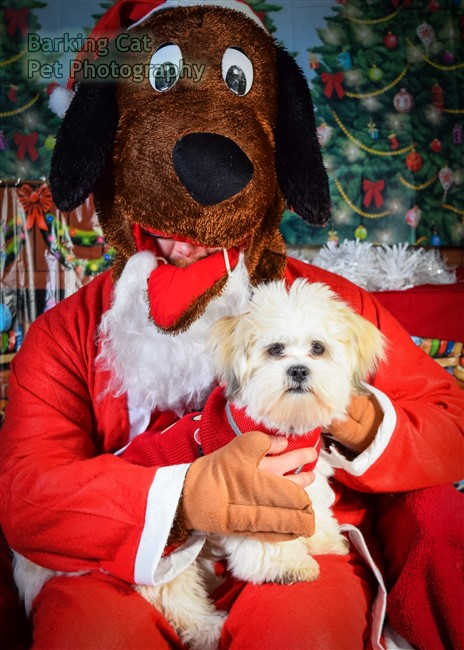 watermarked-Santa Paws-0657