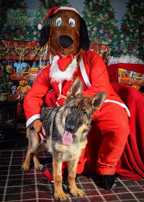 watermarked-Santa Paws-0660