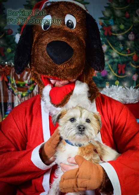 watermarked-Santa Paws-0682