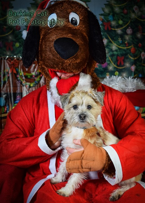 watermarked-Santa Paws-0683