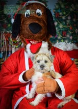 watermarked-Santa Paws-0686