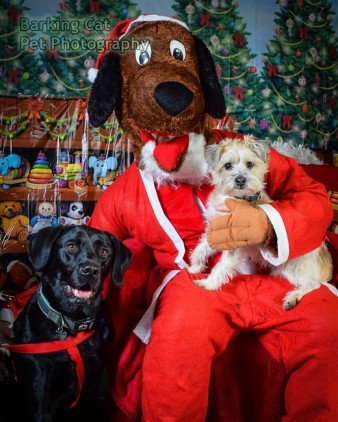watermarked-Santa Paws-0691