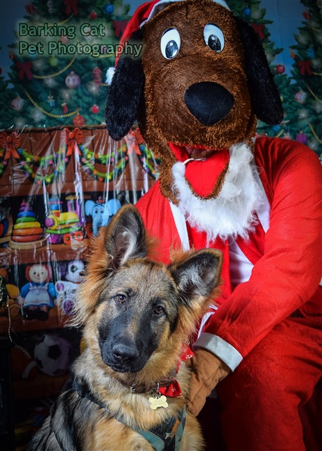 watermarked-Santa Paws-0698