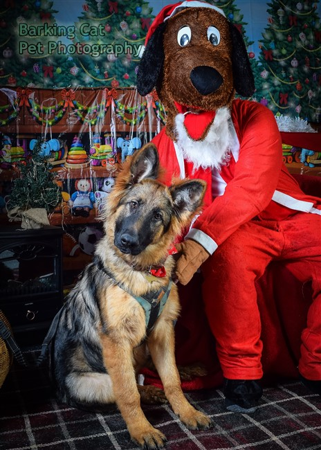 watermarked-Santa Paws-0699