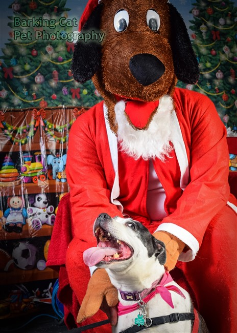 watermarked-Santa Paws-0711
