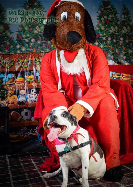 watermarked-Santa Paws-0712