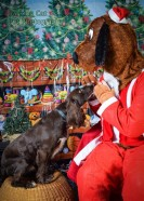 watermarked-Santa Paws-0729