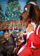 watermarked-Santa Paws-0730