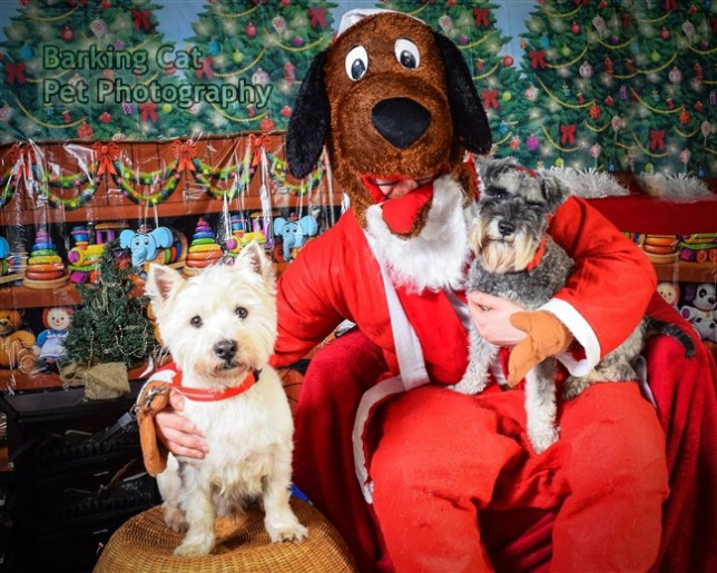watermarked-Santa Paws-0737