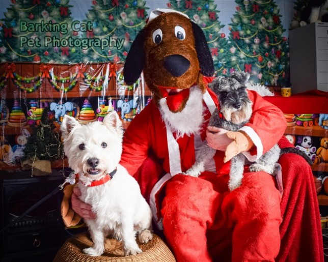 watermarked-Santa Paws-0739