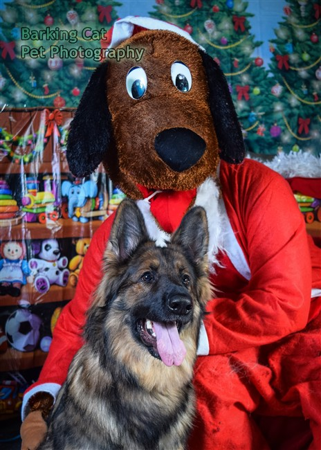watermarked-Santa Paws-0751
