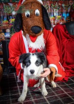 watermarked-Santa Paws-0766