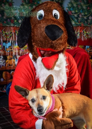 watermarked-Santa Paws-0779