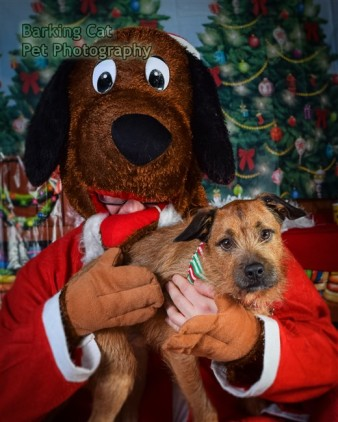 watermarked-Santa Paws-0813