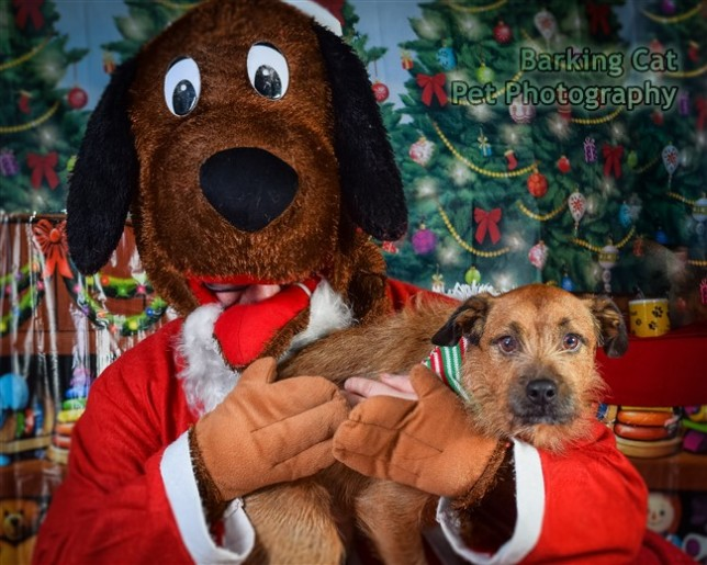 watermarked-Santa Paws-0816