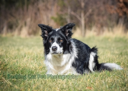 watermarked-Heidi, Swift and Rayna-0199
