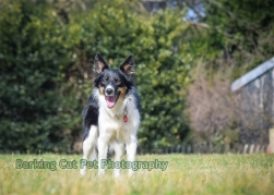 watermarked-Heidi, Swift and Rayna-0291