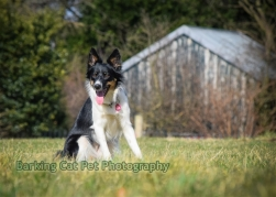 watermarked-Heidi, Swift and Rayna-0308