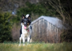 watermarked-Heidi, Swift and Rayna-0315