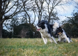watermarked-Heidi, Swift and Rayna-0341